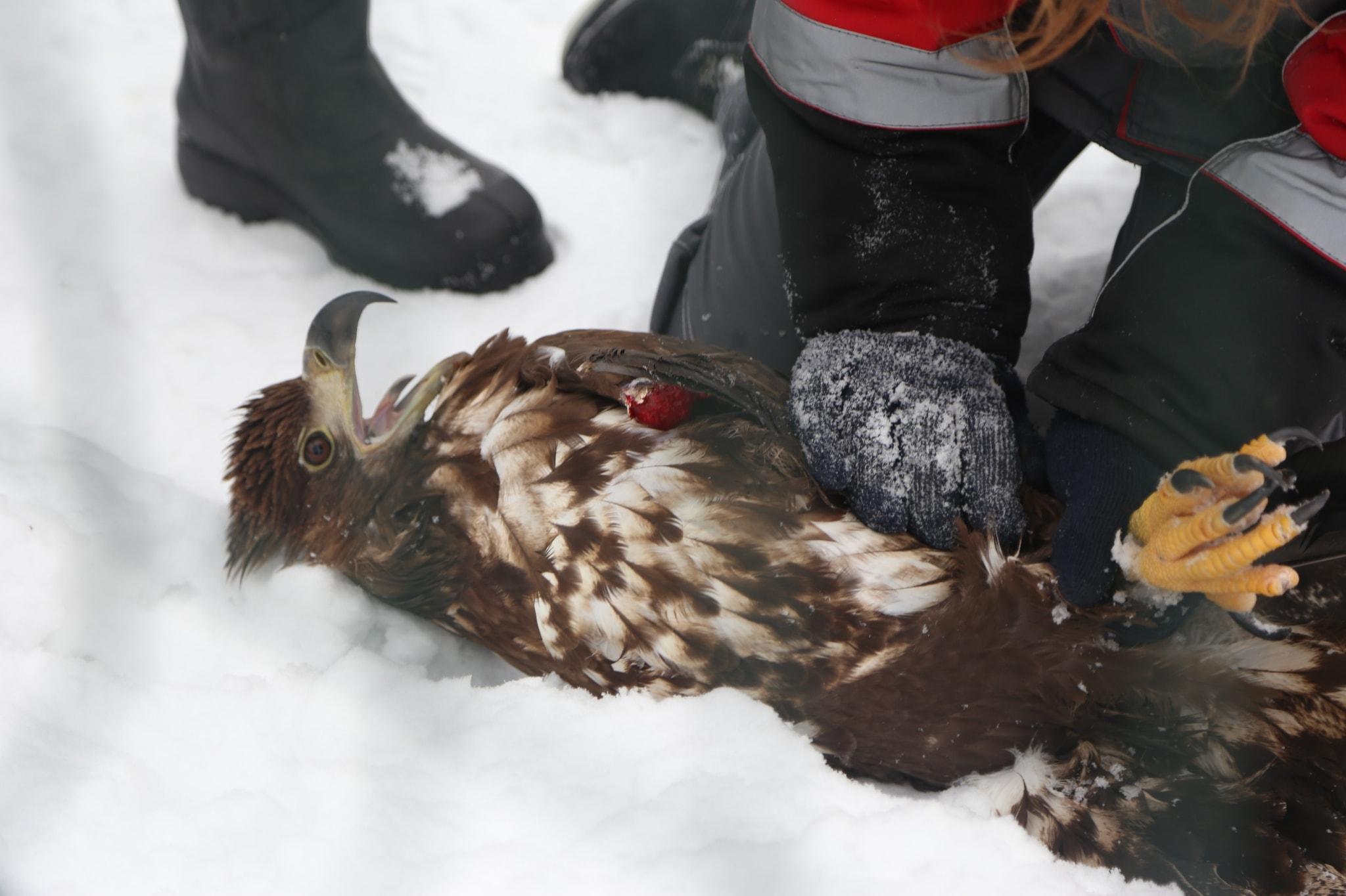 ВРостовской области кконцу зимы начнется вакцинация против гриппа птиц